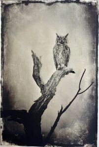 Wendi Schneider, 'Full Moon Owl'