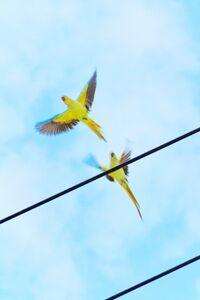 Yoshinori Mizutani, 'Tokyo Parrots 056', 2013