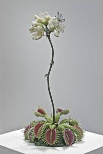 Jeanne Silverthorne, 'Venus Flytrap with Xeres Blue (Extinct)', 2009