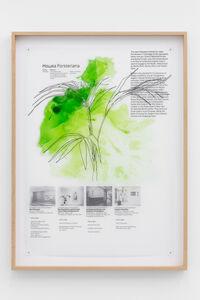 Céline Condorelli, 'Plant Study: Howea Forsteriana', 2018