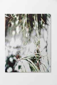 Joachim Koester, 'Praying Mantis', 2017