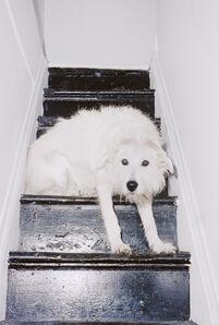 Mark Peckmezian, 'Dogs'
