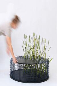 Studio mischer'traxler, 'Limited Grasses', 2020