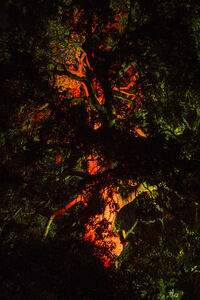 Itamar Freed, 'Burning Tree', 2016
