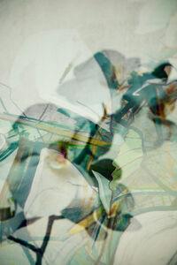 Karina Wisniewska, 'Glades No. 16', 2016