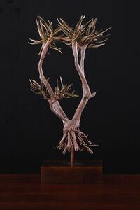 Nic Bladen, 'Aloidendron Ramosissima ', 2019