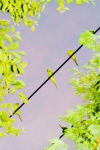 Yoshinori Mizutani, 'Tokyo Parrots 052', 2013