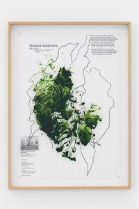 Céline Condorelli, 'Plant Study: Alocasia Sanderiana', 2018
