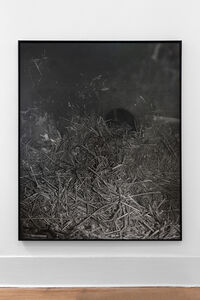 Joanna Piotrowska, 'Enclosure XXXI', 2019