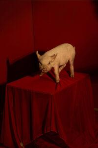 Tania Franco-Klein, 'Untitled, from Mercado de Sonora', 2019
