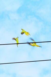 Yoshinori Mizutani, 'Tokyo Parrots 057', 2013