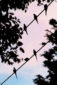 Yoshinori Mizutani, 'Tokyo Parrots 058', 2013