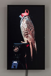 Diana Thater, 'Female Gyr-Prairie Falcon (Shulma)', 2012