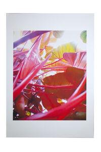Pipilotti Rist, 'Small Homo Plants Herself', 2007