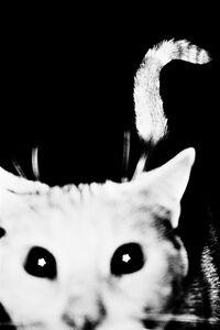 Sohrab Hura, 'Francoise, the neighbourhood cat. France', 2010