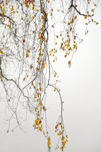 Laurie Lambrecht, 'Lake Trees 11', 2006