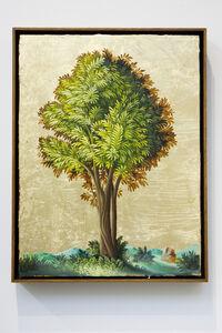 Peter Daverington, 'Portrait of a Tree #2', 2017