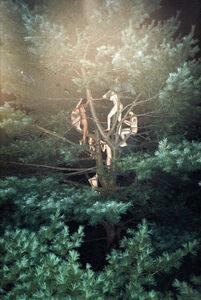 Ryan McGinley, 'Tree #3', 2003