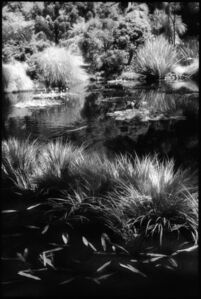 Edward Alfano, 'Huntington Gardens XII, San Marino, CA', 2009
