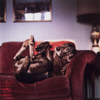 William Wegman, 'On Mrs. Wegman's Couch (From Many Ray:  A Portfolio of 10 Photographs)', 1982