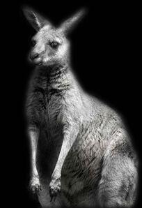 Elliot Ross, 'Animal (10)', 2007