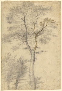 Baccio della Porta, called Fra Bartolommeo, 'Three Studies of Trees', 1508