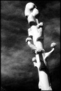 Edward Alfano, 'Agave Flower', 2010