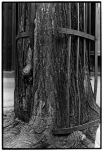 Zoe Leonard, 'Detail (tree + fence)', 1998/1999