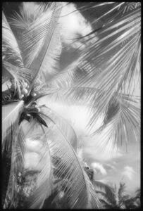 Edward Alfano, 'Lumphini Park - Infrared Photograph on Double Sided Aluminum', 2015
