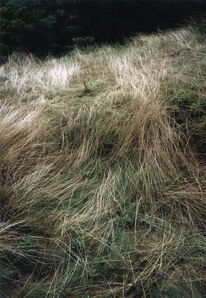 Jitka Hanzlová, 'Forest #10, Untitled (Grass Drawings)', 2004