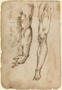 Domenico Beccafumi, 'Anatomical Studies'