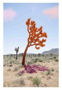 Sarah Anne Johnson, 'Joshua Tree (Orange)', 2018