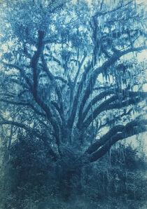 Thomas Hager, 'Mandarin Love Oak, 2/12', 2015