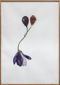 Mariana Palma, 'Sem Título [Untitled]', 2020