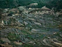 Rice Terraces #5, Western Yunnan Province, China