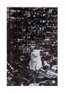 Brassaï, 'Chat dans la cave'