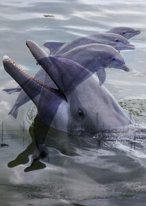 Roe Ethridge, 'Double Dolphin', 2018