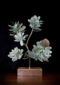 Nic Bladen, 'Protea Nitida Branch', 2020