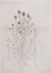 Gunnar Norrman, 'Tistlar (Thistles)'