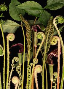 Lisa Frank, ' 1 image Woodland Night (Contemporary Digital Flora Still Life Print, Green on Black)', 2007