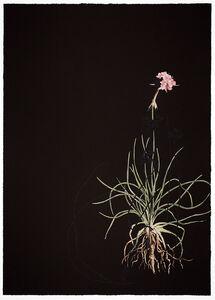 Katrina Moorhead, 'Dark Botanical', 2019