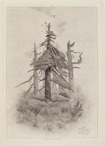 Robert Swain Gifford, 'Old Trees at Naushon Island', 1864