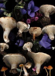 Lisa Frank, 'Lactarius with Bell Flowers (Modern Digital Mushroom and Flower Still Life)', 2007