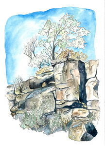 Scott Winterrowd, 'Petroglyphs and Olive Tree', 2015