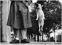 Paris (dog jumping)