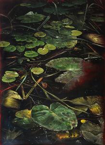 Helena Parada-Kim, 'Pond lilies (center panel)', 2018