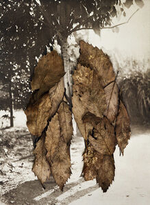 Anni Leppälä, 'Leaves II (The Couple)', 2013