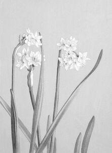 Claudio Bravo, 'Narcissus', 1995