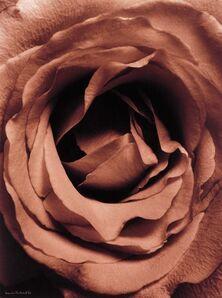 Denis Brihat, 'Rose', 1994