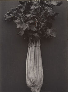 Charles Jones (1866-1959), 'Celery Wright's White', Probably executed about 1895-1910
